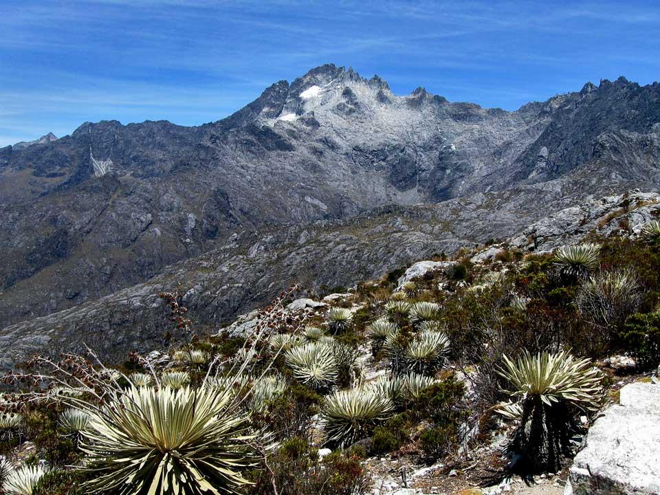 Resultado de imagen de pico bolivar